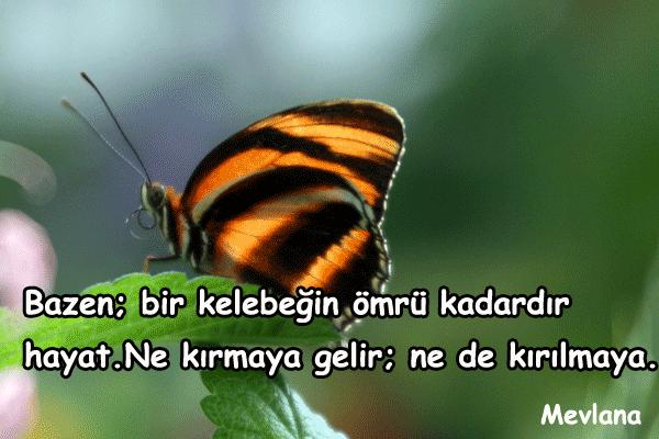 Kelebek İle İlgili Güzel Sözler