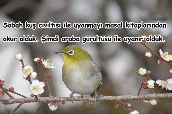 Kuşlar İle İlgili Güzel Sözler