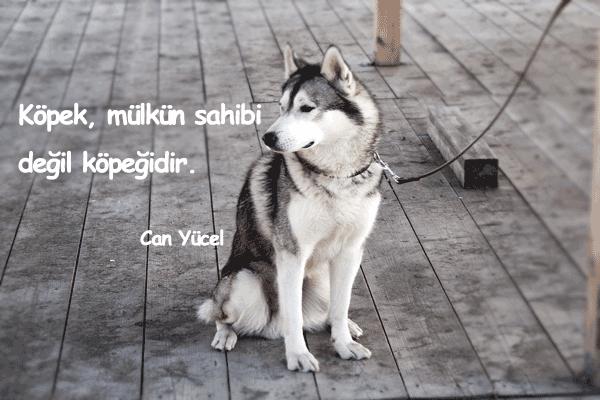 Köpekler İle İlgili Sözler