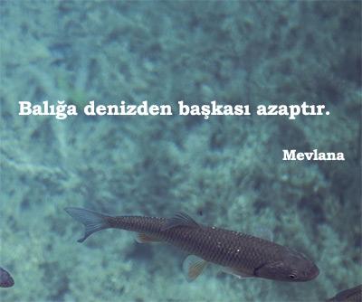 Balık İle İlgili Sözler